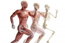 Muskel- / Sehnenerkrankungen